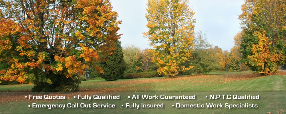 Fully qualified Tonbridge tree surgeons